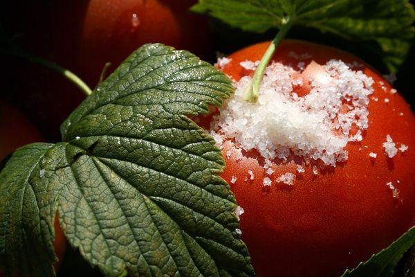 Помидор с листом смородины