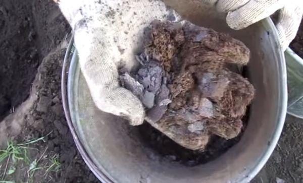 почва для груши
