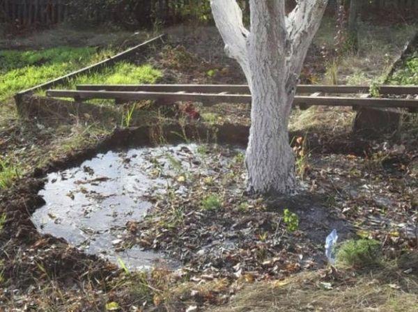 полив дерева