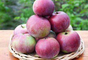 Описание и специфика выращивания яблони сорта Алеся