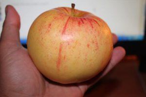 Описание яблони сорта Болотовское, посадка и выращивание