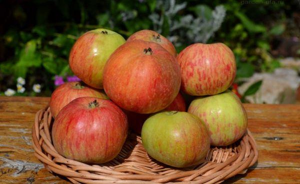 Коробовка плоды