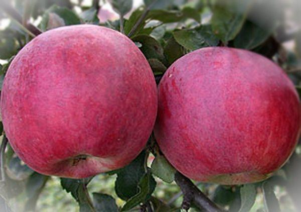 два яблока