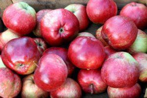 Описание и особенности выращивания яблони сорта Легенда