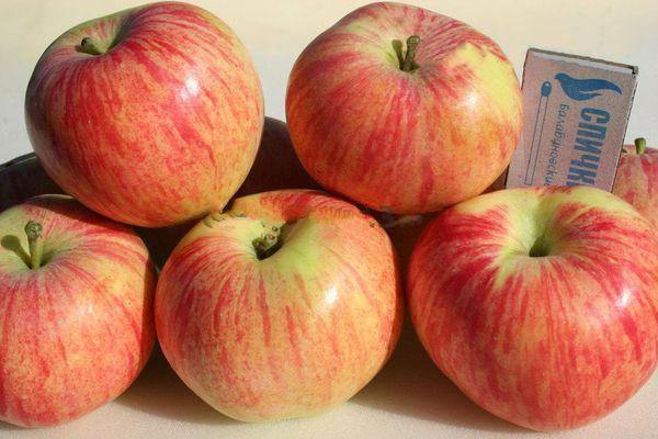 яблоки Юбиляр