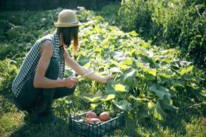 Лунно-посевной календарь садовода и огородника на сентябрь 2021
