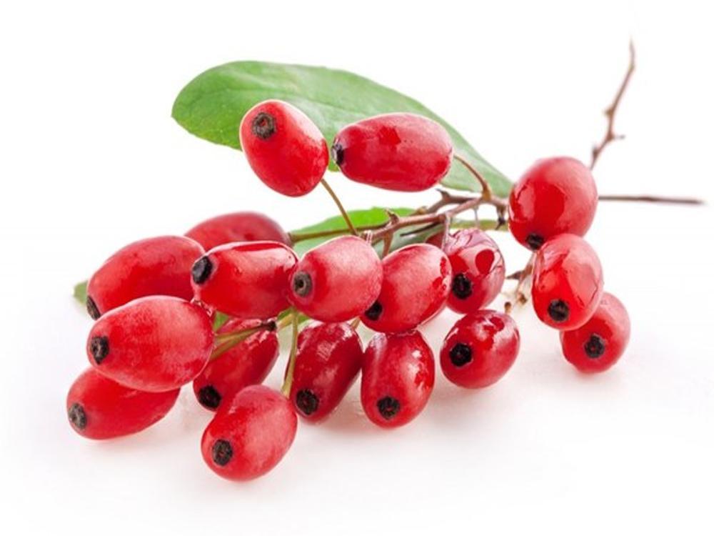 барбарис ягоды