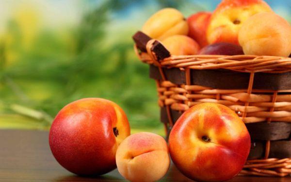Персик и абрикос