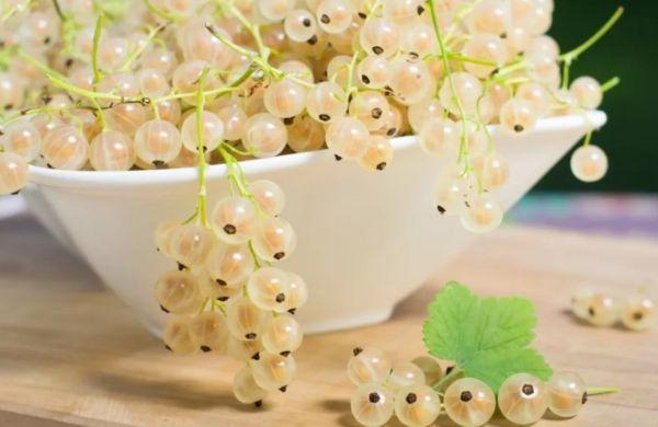 белые ягоды