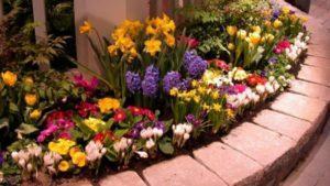 С какими цветами на клумбе сочетаются ирисы, с чем лучше сажать