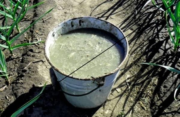 200 г древесной золы смешать с 1 столовой ложкой суперфосфата и растворить в 1 ведре теплой воды.