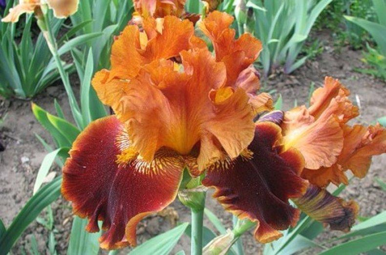Оранжевые и коричневые