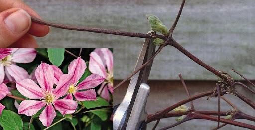 обрезка цветов