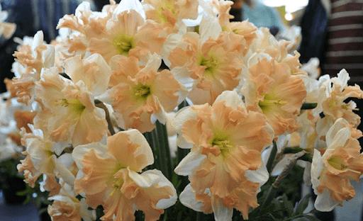 Разрезнокорончатые цветы