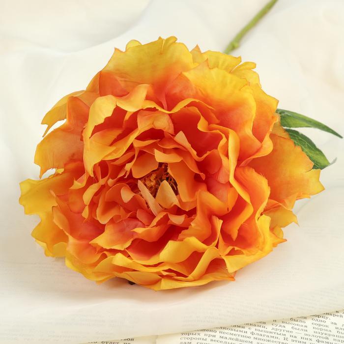 оранжевые пионы