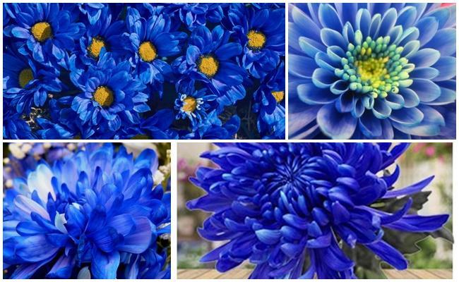 синее цветы
