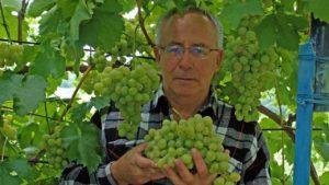 Список топ-16 фунгицидов для винограда и инструкции по их применению