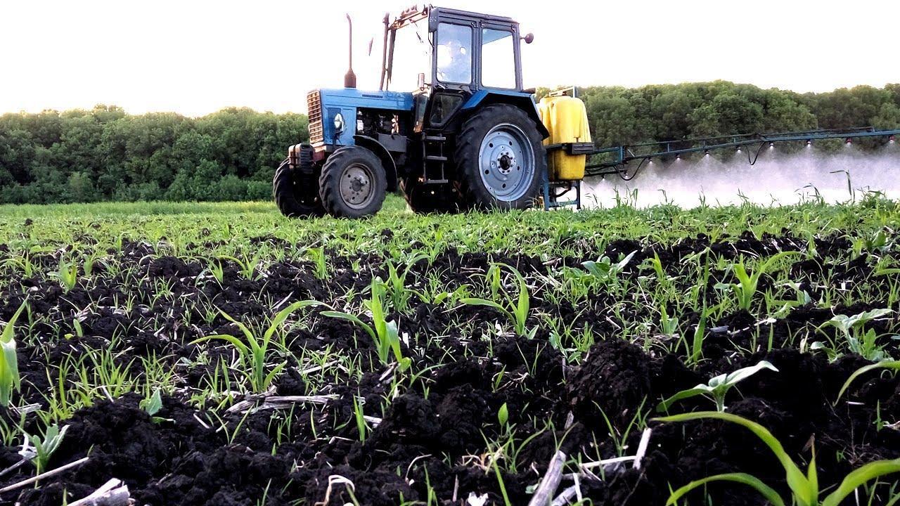 обработка кукурузы