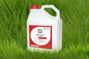 Инструкция по применению и состав гербицида Миура, норма расхода и аналоги