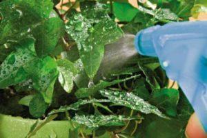 Виды фунгицидов для сада и описания топ-24 лучших, инструкции по применению