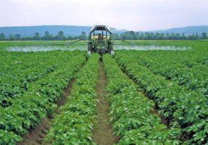 Описание видов фунгицидов для картофеля и перечень средств, какое выбрать