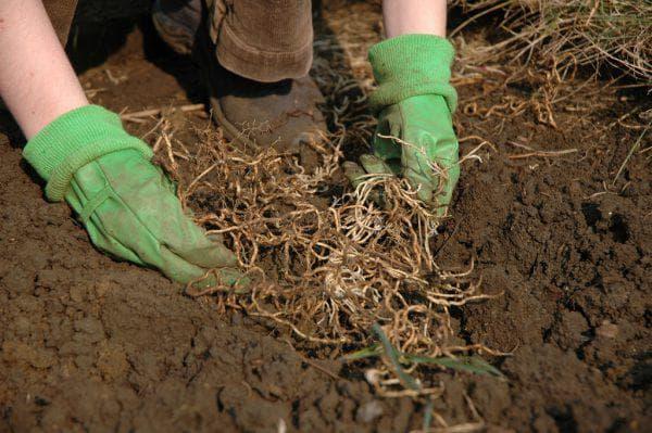 Измельчение корней
