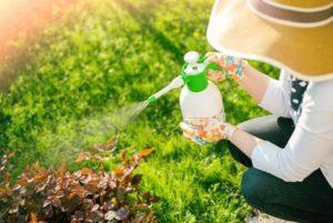 Как избавиться от пырея, меры борьбы и лучшие гербициды против сорняка