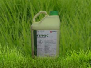 Инструкция по применению и состав гербицида Гермес, дозировка и аналоги