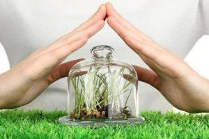 Список топ-11 фунгицидов для комнатных растений и описание препаратов