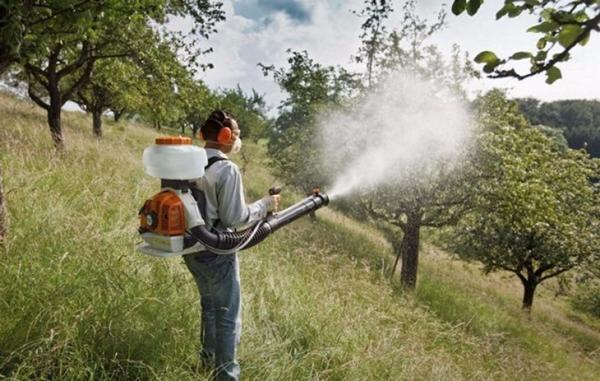опрыскивание дерева