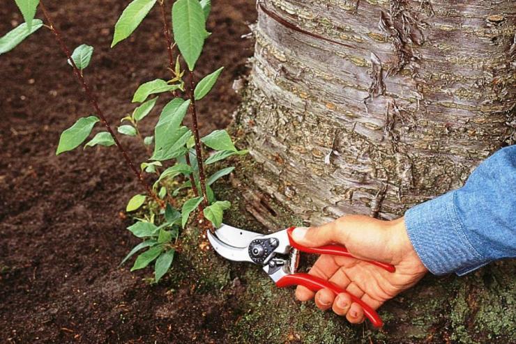 как избавиться от поросли деревьев на участке