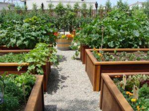 Как сделать грядку с нуля без травы и сорняков, идеи и способы с прополкой и без