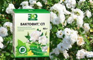 Инструкция по применению Бактофита для растений и состав фунгицида