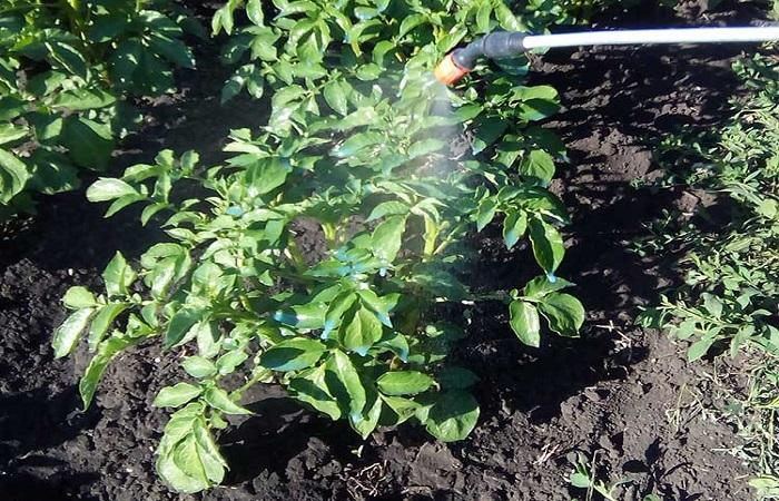 опрыскивать картофоль