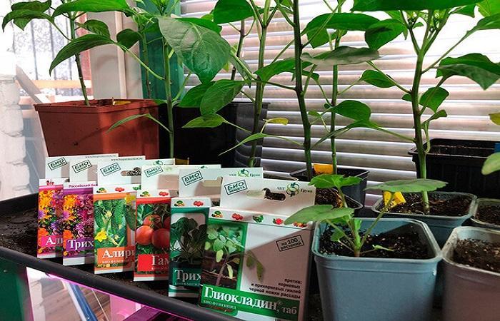 растения с лекарствами