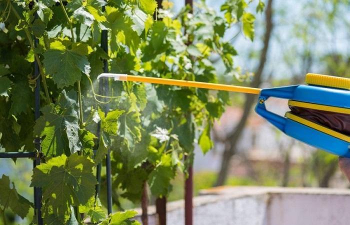 обработка виноградников