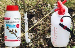 Инструкция по применению Профилактина для сада, дозировка пестицида и аналоги