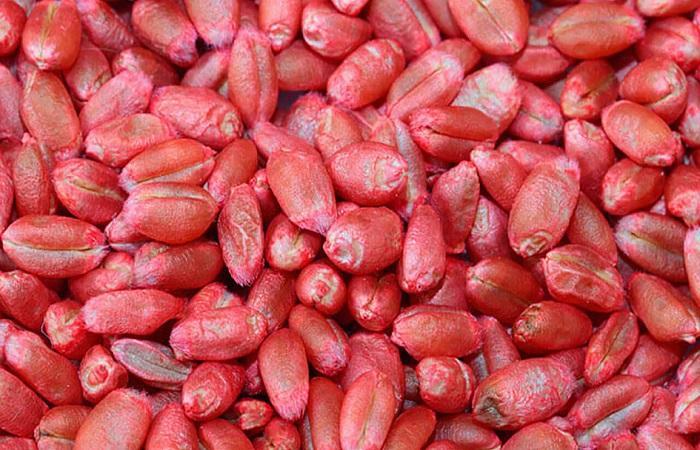 красные зерна