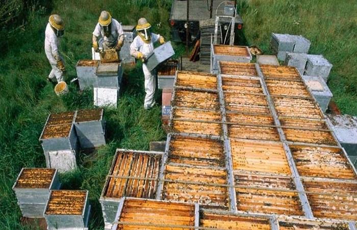 пчелы с пчеловодами