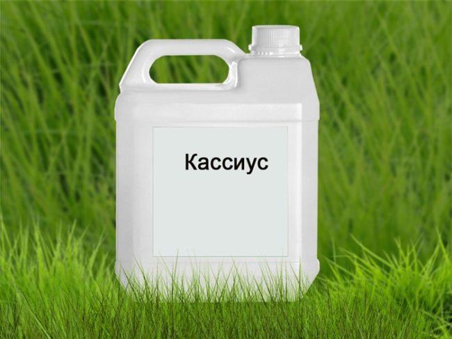 кассиус гербицид