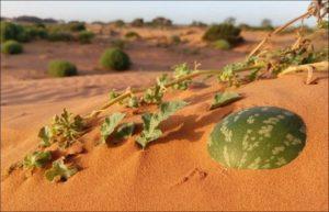 Особенности песчаных почв и что на них хорошо растет, лучшие многолетники