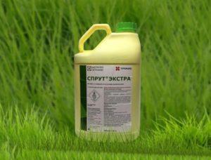 Топ-10 системных гербицидов сплошного действия и как выбрать средство