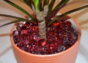 Инструкция по применению гидрогеля для растений, что это и для чего нужен