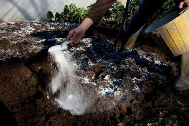 известкование почвы