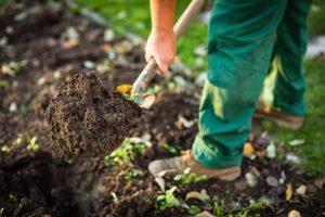 Правила известкования почвы и нормы внесения пушонки, сроки для раскисления
