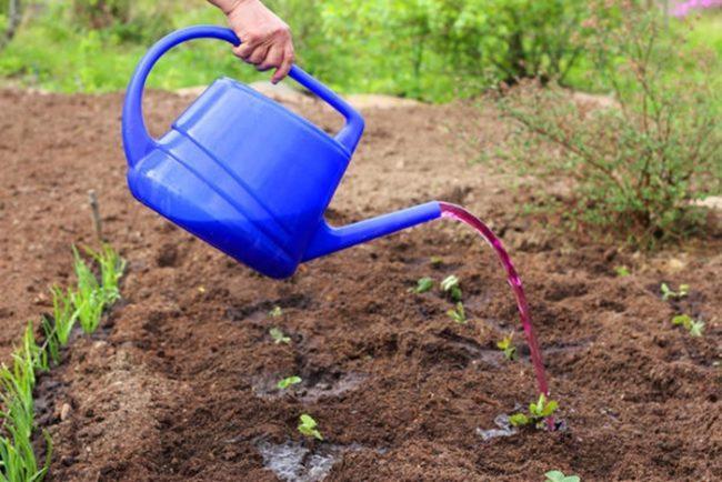 марганцовка для огорода
