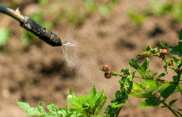 опрыскивать растение