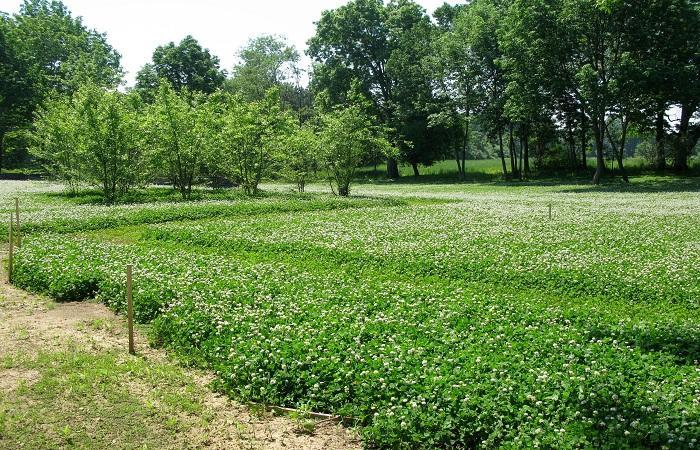 огород зеленый